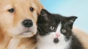 veterinario-washintong