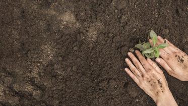 Carenza di calcio nelle piante