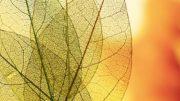 Carenza di ferro nelle piante
