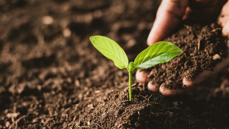 Carenza di fosforo nelle piante