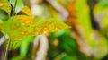 Come eliminare la mosca bianca dalle piante