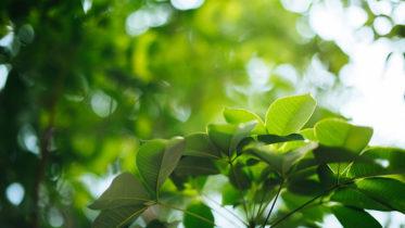 Come eliminare i tripidi dalle piante