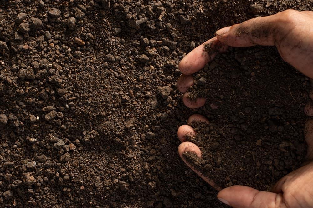 Fosforo del suolo